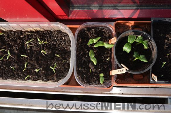 erste_pflanzen