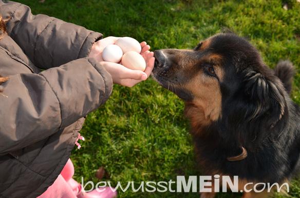 eier_hund