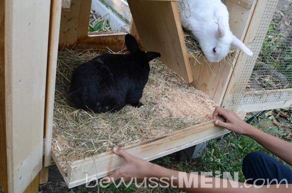 kaninchenstall1