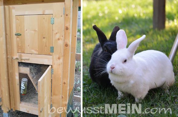 kaninchenstall2